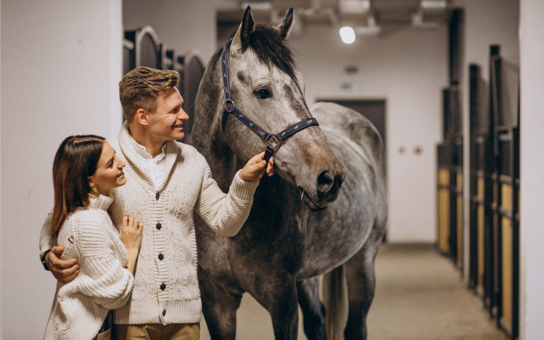 La Vente d'un cheval entre un professionnel et un particulier